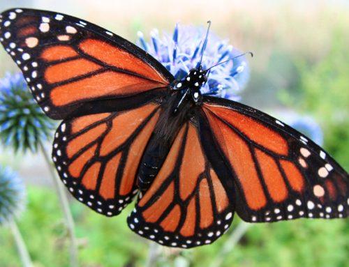 Leptirom protiv falsifikata